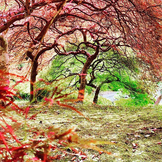 散歩途中に見つけた異世界。そんなにレタッチしてないで、雰囲気出てる。自然って面白い。 - from Instagram
