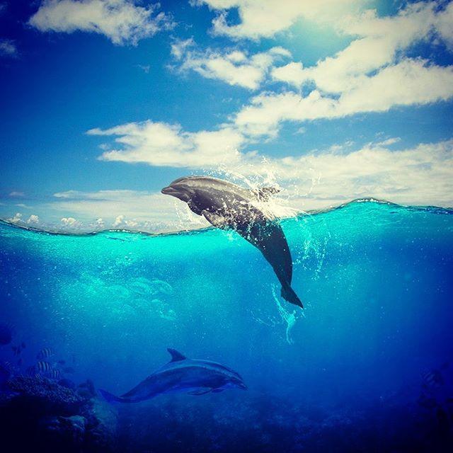 イルカと海のレタッチ合成。 - from Instagram