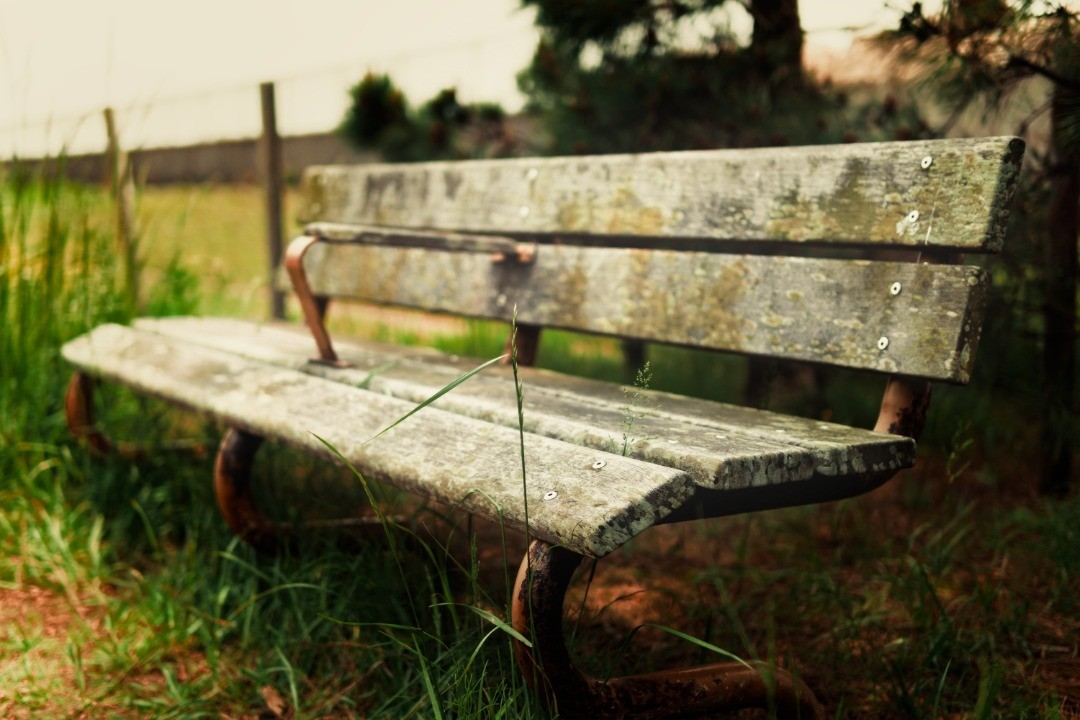 Abandoned bench. α6400-sigma 30mm#wood #background #nature #outdoor #green #grass #beautiful #summer #garden #landscape #park #wooden #tree #old #brown #white #bench #water #thailand #forest #plant #beauty #outdoors #seat #country - from Instagram